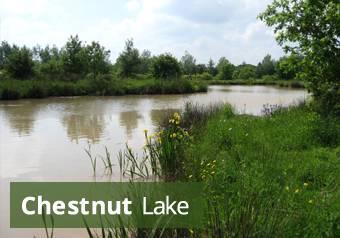 chestnut-lake